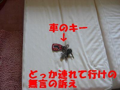 CIMG7543.jpg