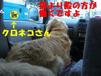 CIMG7662.jpg