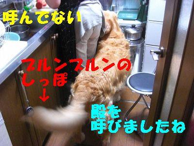 CIMG7683.jpg