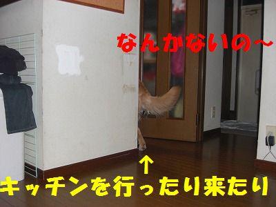 CIMG8272.jpg