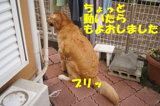 DSC01934.jpg
