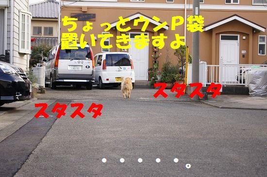 DSC02853.jpg