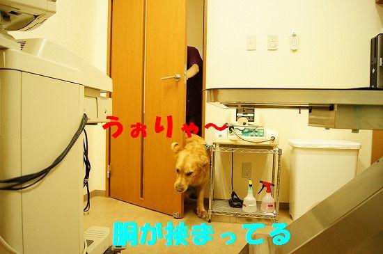 DSC03141.jpg