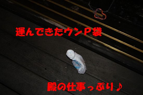 DSC04314.jpg