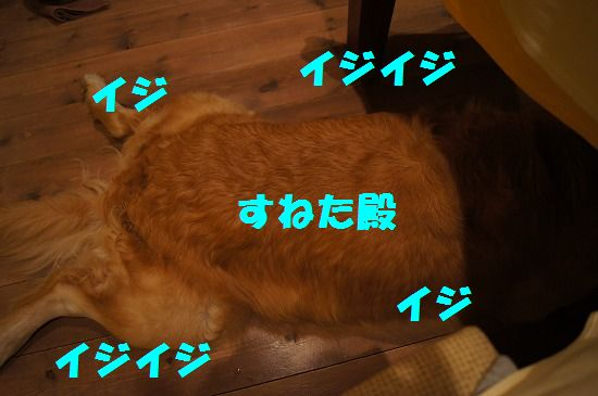 DSC04429.jpg