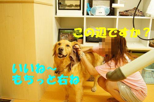 DSC04519.jpg