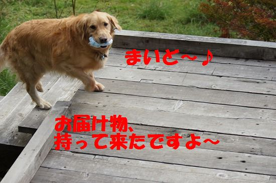 DSC04738.jpg
