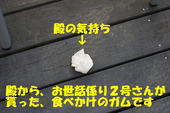 DSC04789.jpg