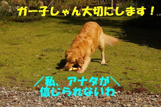 DSC0482311.jpg