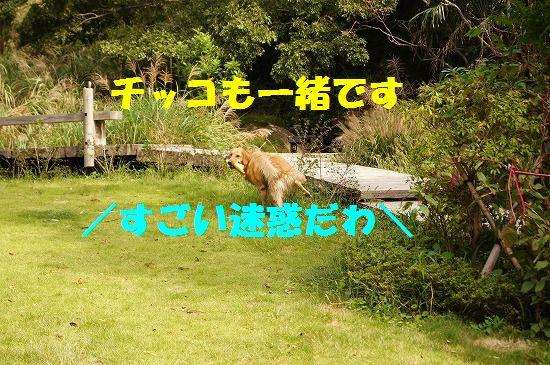 DSC0491012.jpg