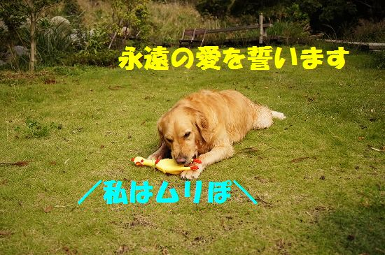 DSC0494213.jpg