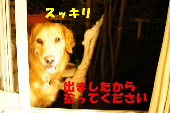 DSC06180.jpg