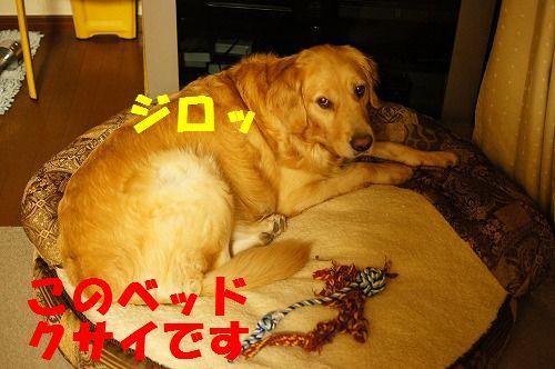 DSC06629.jpg