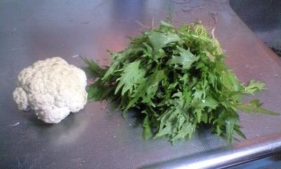 081224実織水菜・カリフラワー収穫
