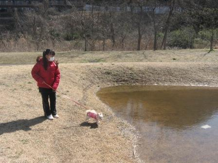 IMG_0031水溜りに近づくベリー