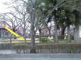 090323飯能桜祭り