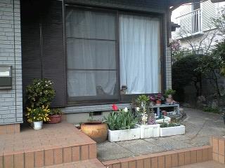 090405鈴木さん宅の犬たち