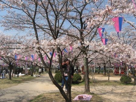 IMG_0026桜の木に登る実織