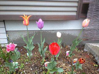 090420花壇