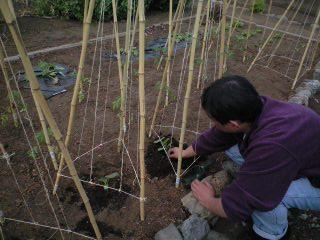 CA3A0023苗を植えるパパ