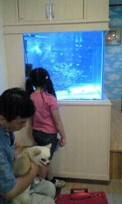 090614ノヤ動物病院水槽前の実織パパプリン
