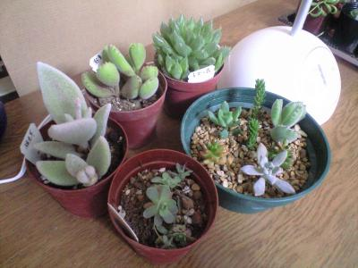 多肉植物集合