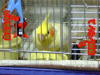 piro20081023-4.jpg