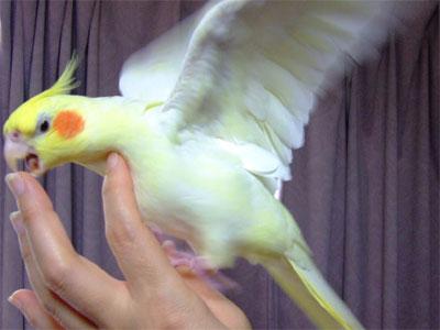 piro20081023-5.jpg