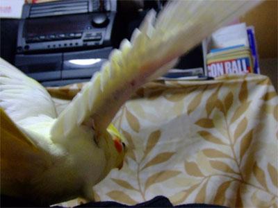 piro20081024-3.jpg