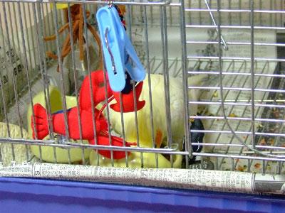 piro20081025-4.jpg