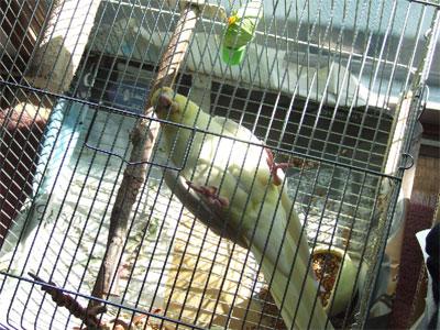 piro20081029-4.jpg