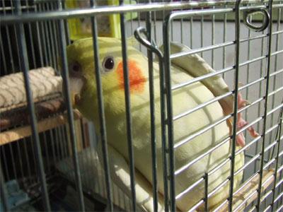 piro20081031-1.jpg