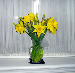 one narcissus_0301