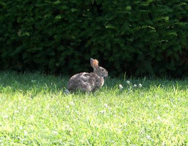 bunny_0807_01_300