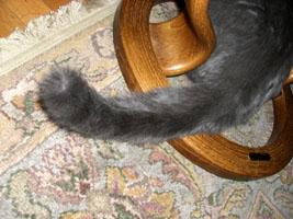 cattail_big02