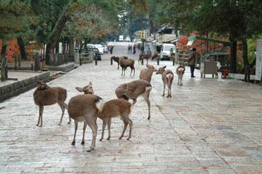 deer_01.jpg