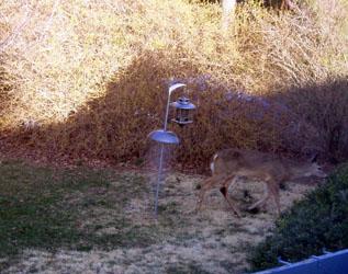 deer feeder_02