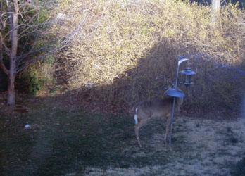 deer feeder_01