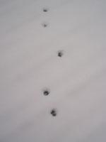 footmark_1205
