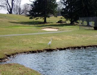 golfcourse_02