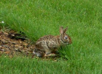 rabbit062502