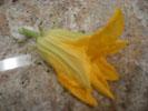 zucchini_080709_03_250