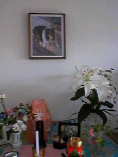 今のマコの祭壇