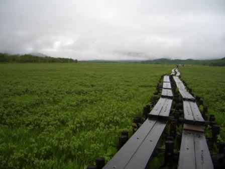 尾瀬ヶ原雨