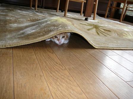 カーペットの下で