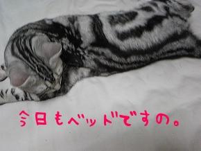ベッド好き。