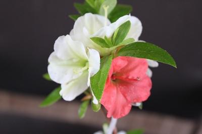 緑花の泉213_2