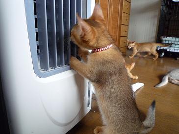 嶋田 ラテちゃん VS 冷扇器 1