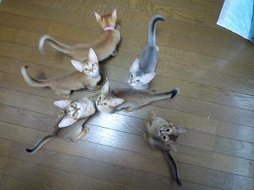 静こにゃん 6匹に!!!