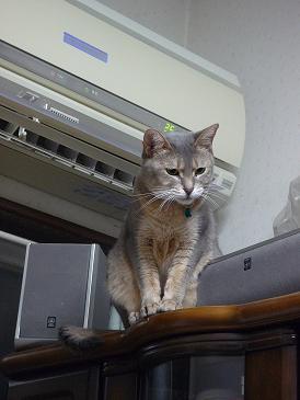 颯 猫じゃらし 2